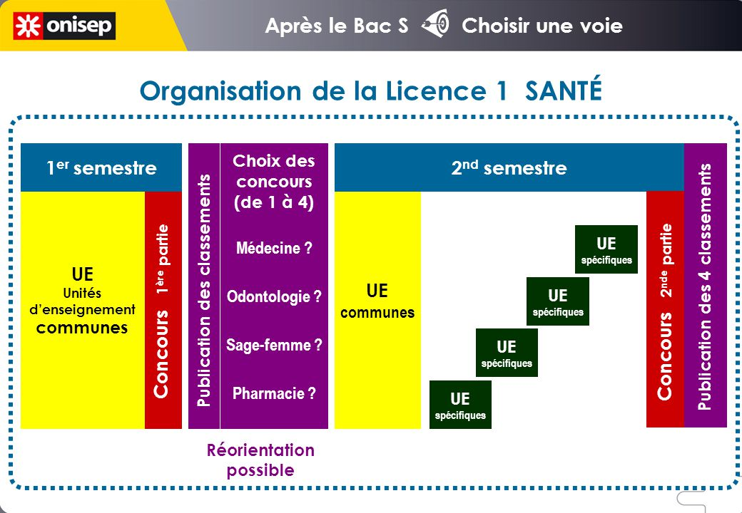 Organisation de la Licence 1 SANTÉ