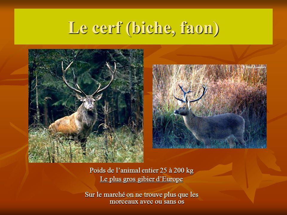 Le cerf (biche, faon) Poids de l'animal entier 25 à 200 kg