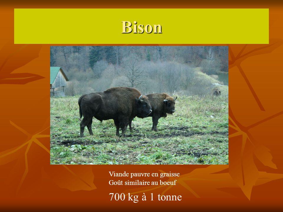 Bison 700 kg à 1 tonne Viande pauvre en graisse
