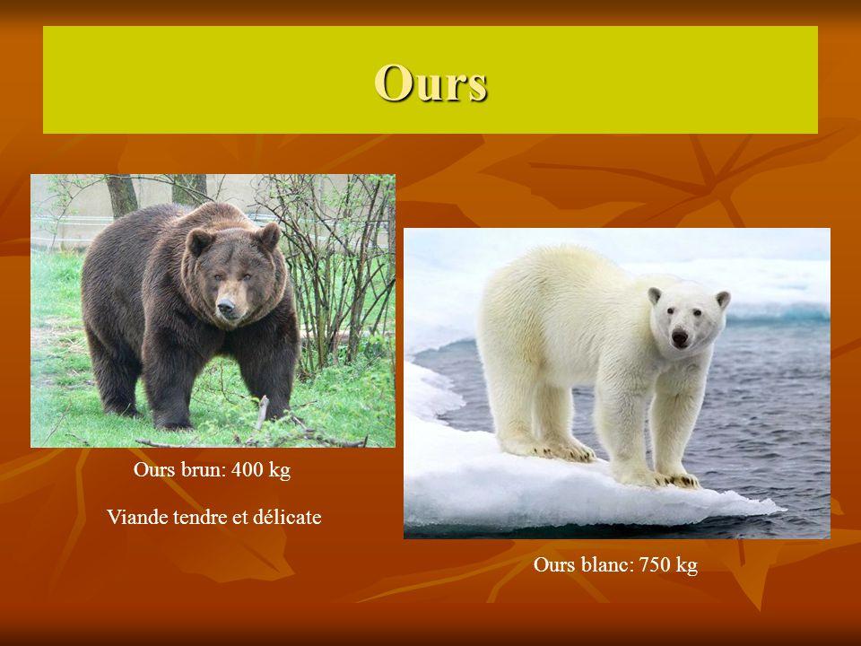 Ours Ours brun: 400 kg Viande tendre et délicate Ours blanc: 750 kg