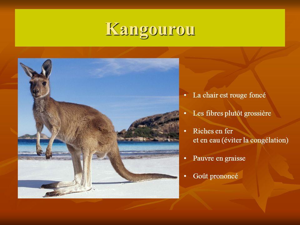 Kangourou La chair est rouge foncé Les fibres plutôt grossière