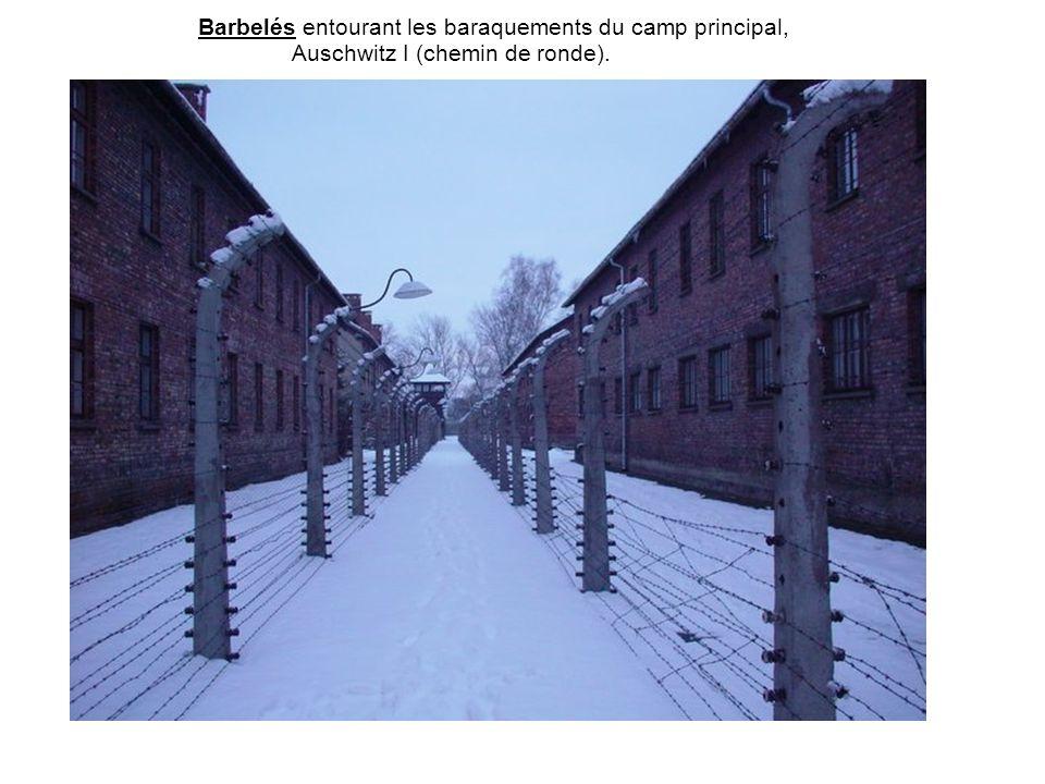 Barbelés entourant les baraquements du camp principal,
