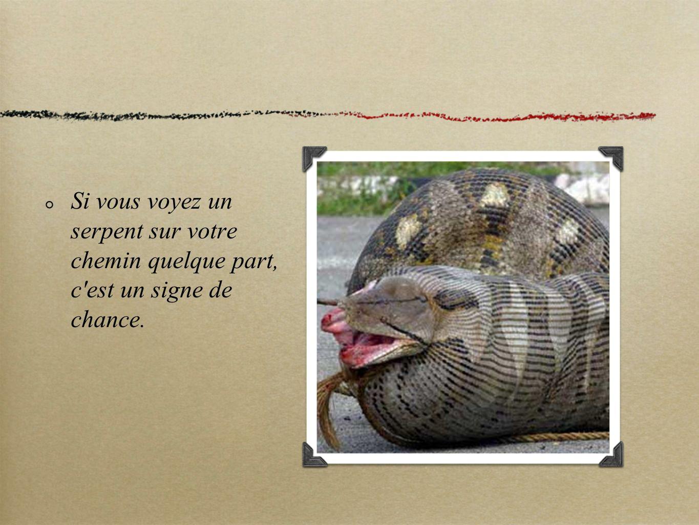 Si vous voyez un serpent sur votre chemin quelque part, c est un signe de chance.