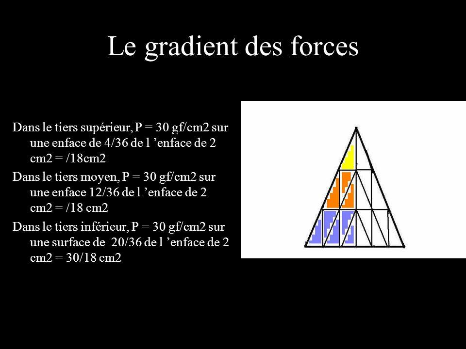 Le gradient des forces Dans le tiers supérieur, P = 30 gf/cm2 sur une enface de 4/36 de l 'enface de 2 cm2 = /18cm2.
