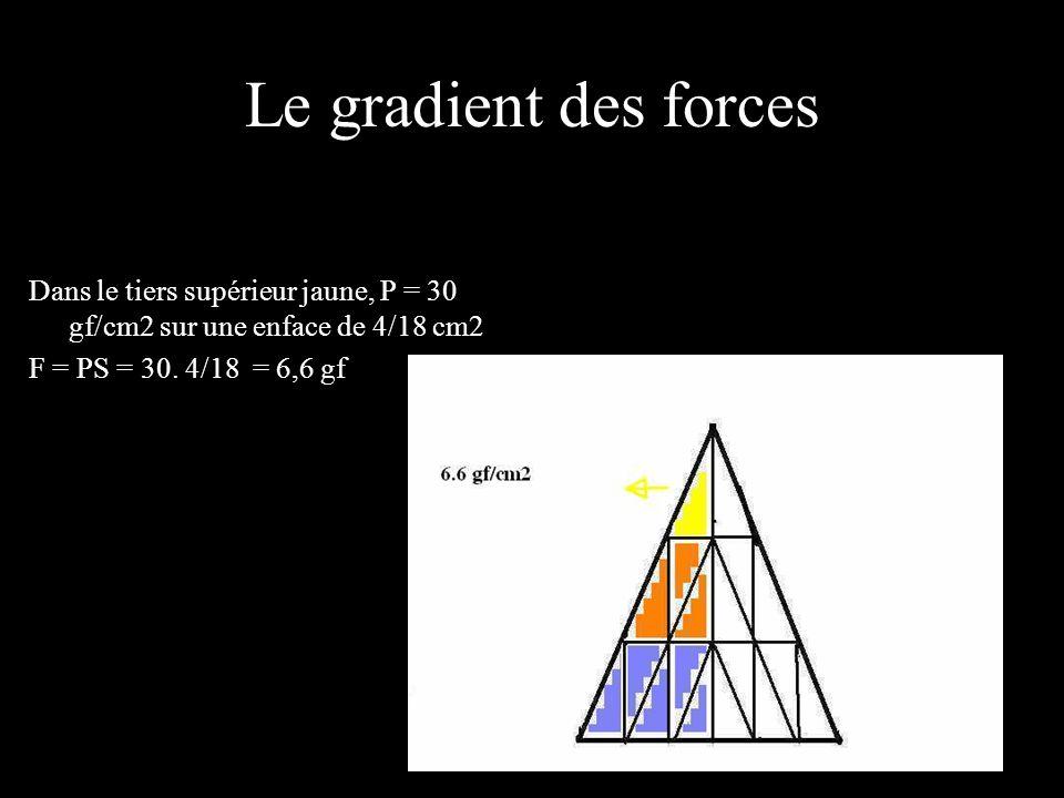 Le gradient des forces Dans le tiers supérieur jaune, P = 30 gf/cm2 sur une enface de 4/18 cm2.