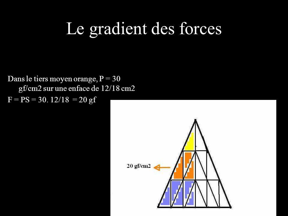 Le gradient des forces Dans le tiers moyen orange, P = 30 gf/cm2 sur une enface de 12/18 cm2.