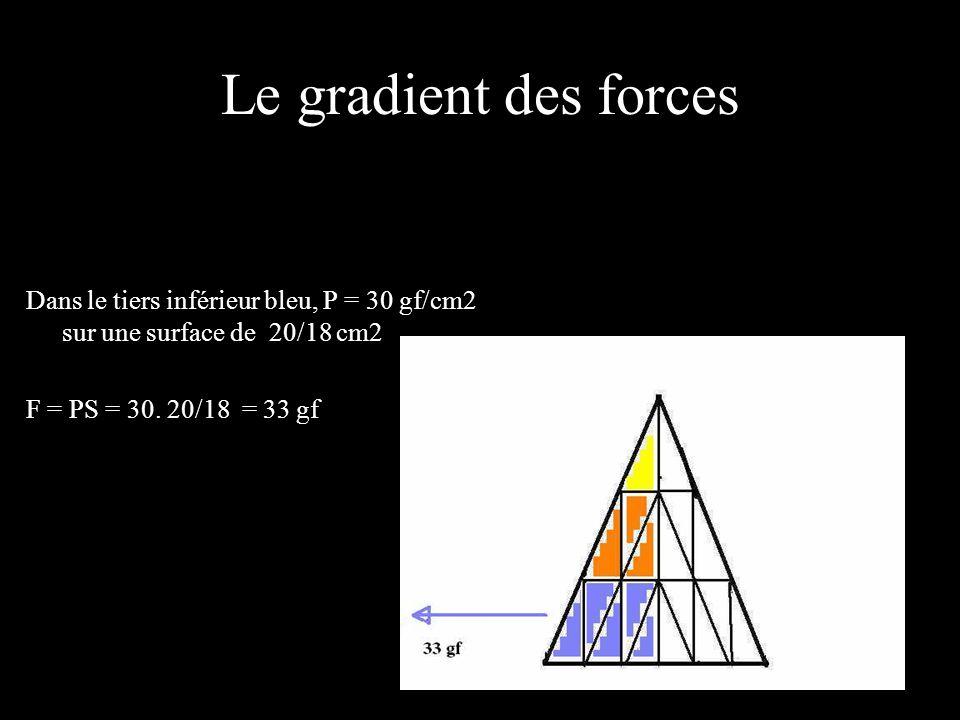 Le gradient des forces Dans le tiers inférieur bleu, P = 30 gf/cm2 sur une surface de 20/18 cm2.