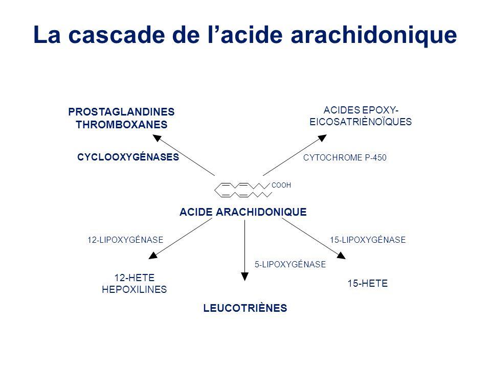 La cascade de l'acide arachidonique