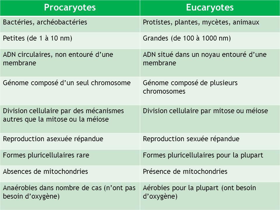 Procaryotes Eucaryotes