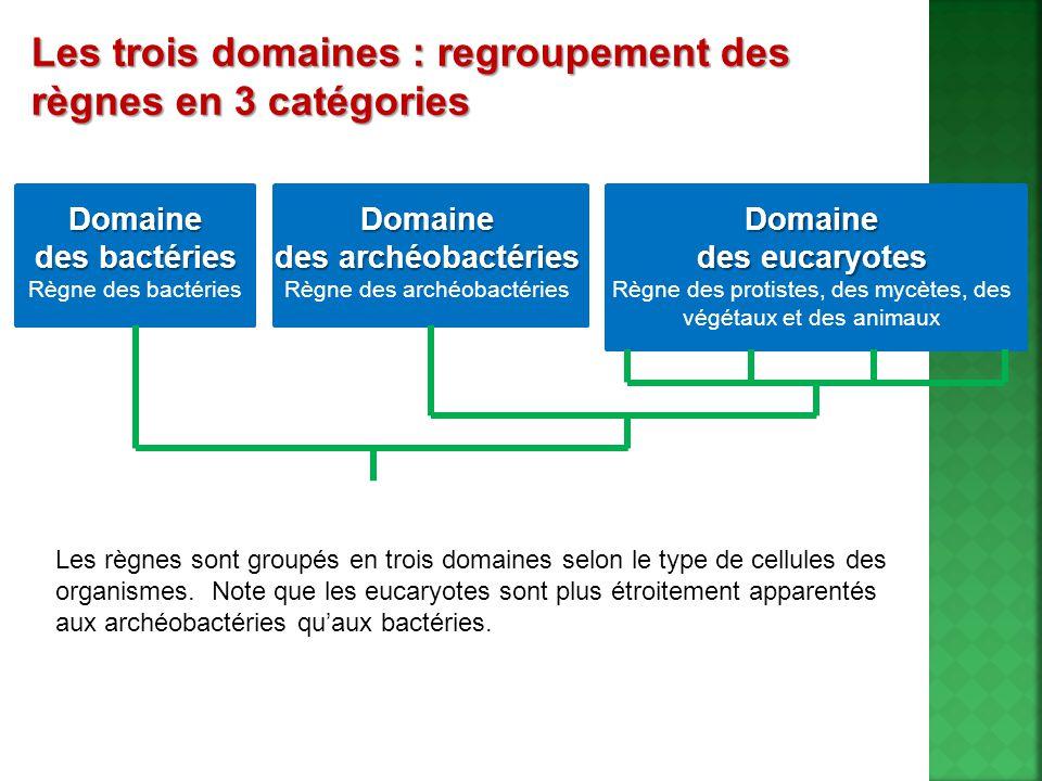 Les trois domaines : regroupement des règnes en 3 catégories