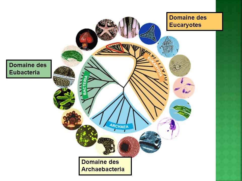 Domaine des Eucaryotes