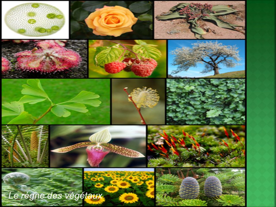 Le règne des végétaux