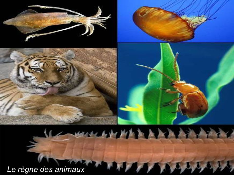 Le règne des animaux