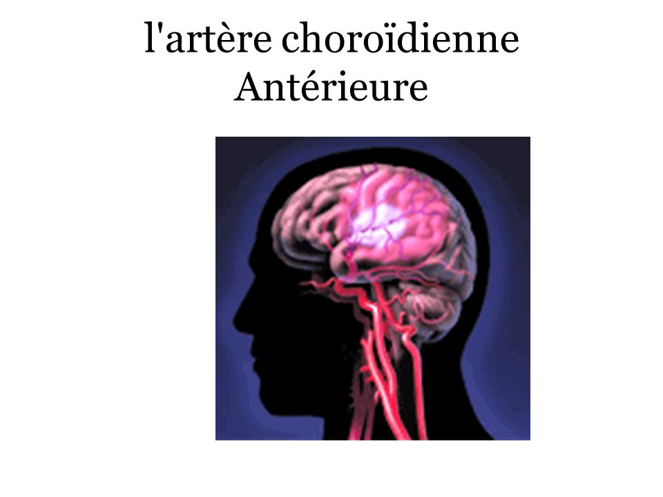 l artère choroïdienne Antérieure