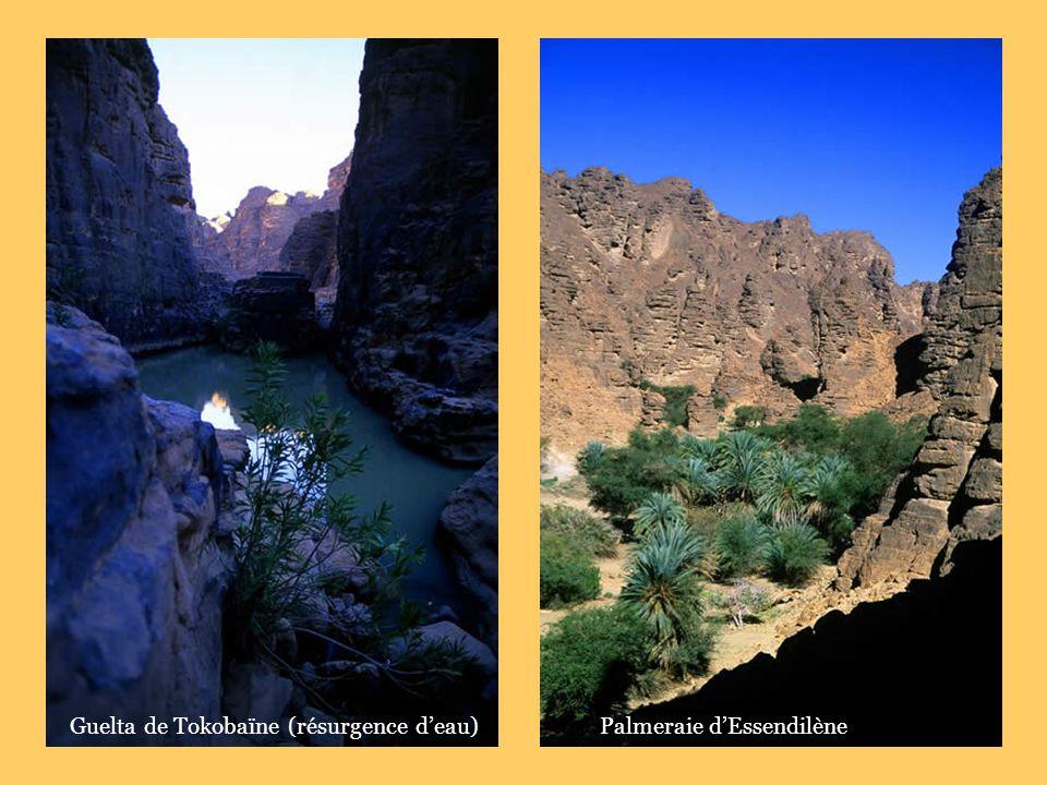 Guelta de Tokobaïne (résurgence d'eau)