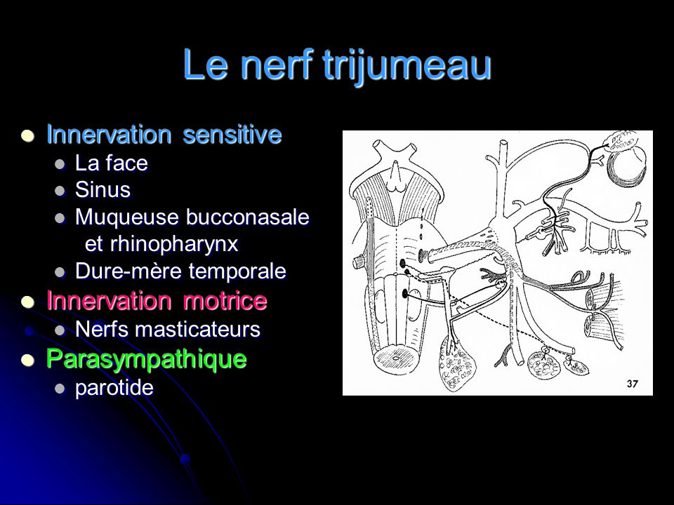 Le nerf trijumeau Innervation sensitive Innervation motrice