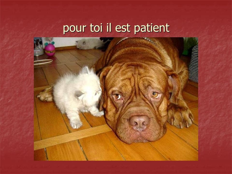 pour toi il est patient