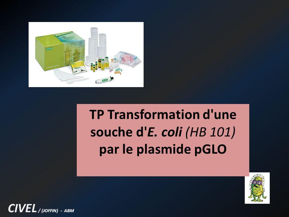 TP Transformation d une souche d E. coli (HB 101) par le plasmide pGLO