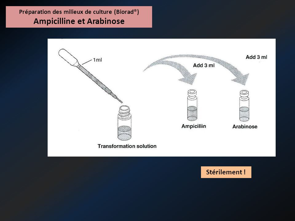 Préparation des milieux de culture (Biorad®) Ampicilline et Arabinose