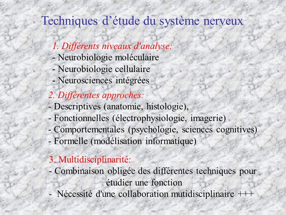 Techniques d'étude du système nerveux