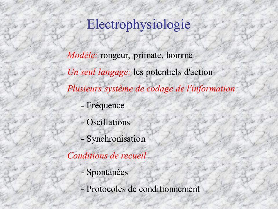 Electrophysiologie Modèle: rongeur, primate, homme