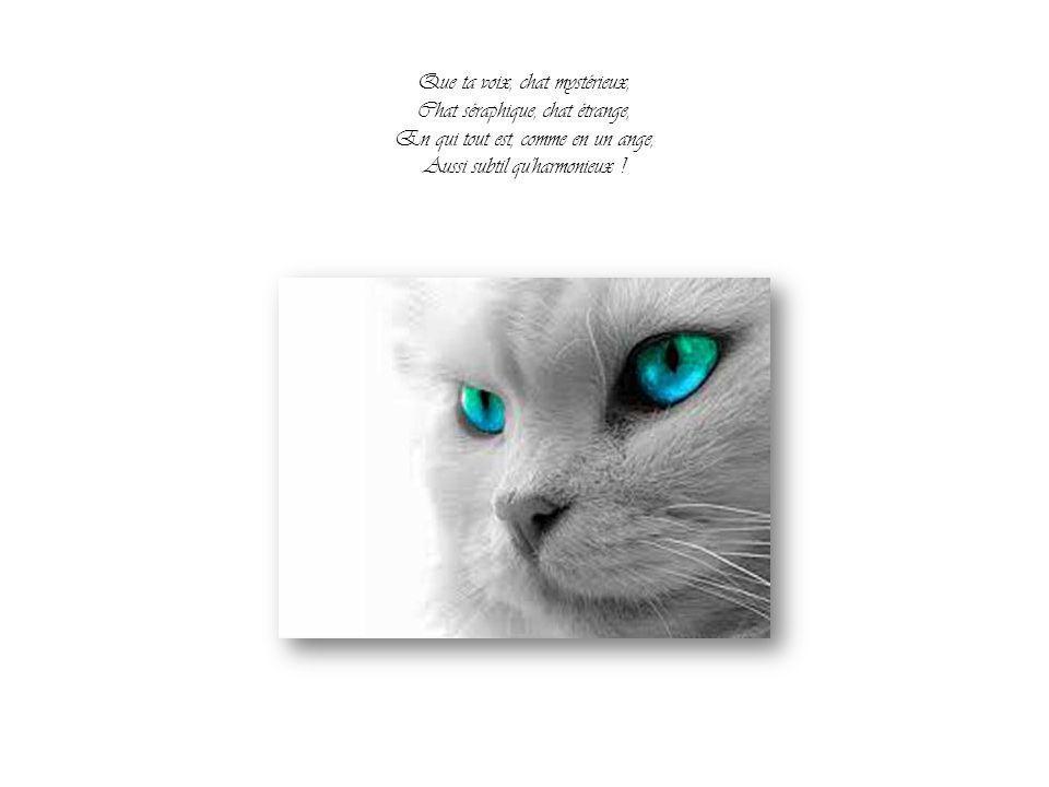 Que ta voix, chat mystérieux, Chat séraphique, chat étrange,
