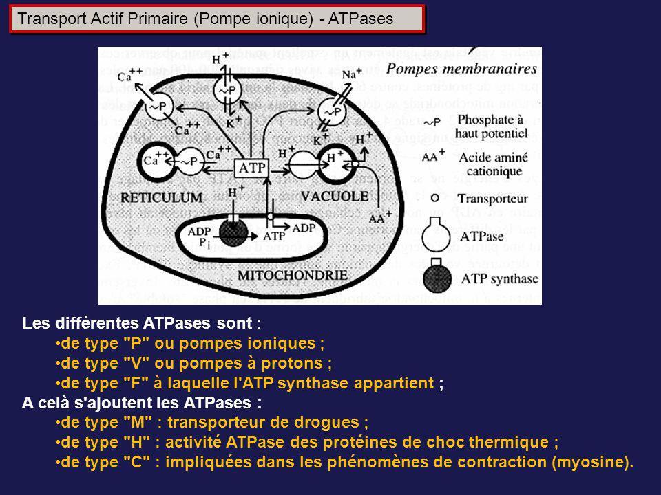 Transport Actif Primaire (Pompe ionique) - ATPases