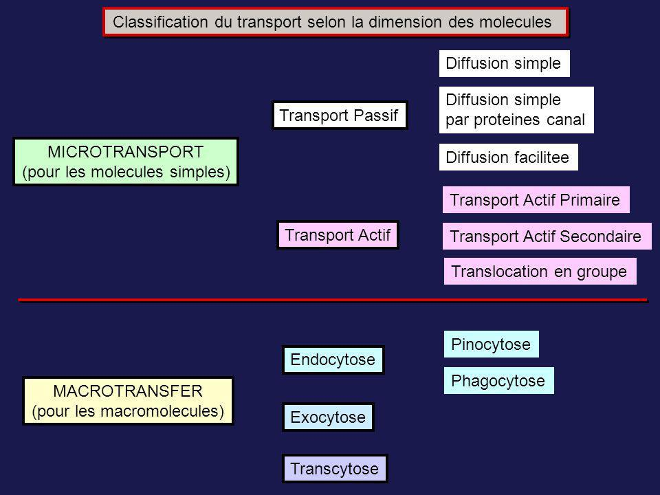 Classification du transport selon la dimension des molecules