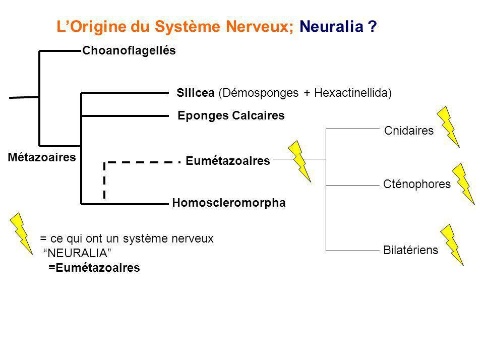 L'Origine du Système Nerveux; Neuralia