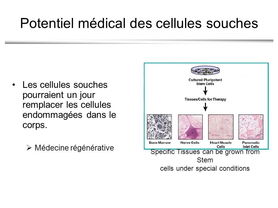 Potentiel médical des cellules souches