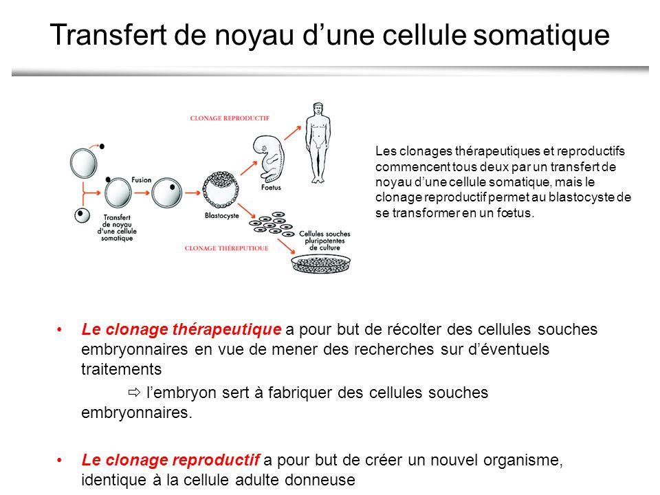 Transfert de noyau d'une cellule somatique