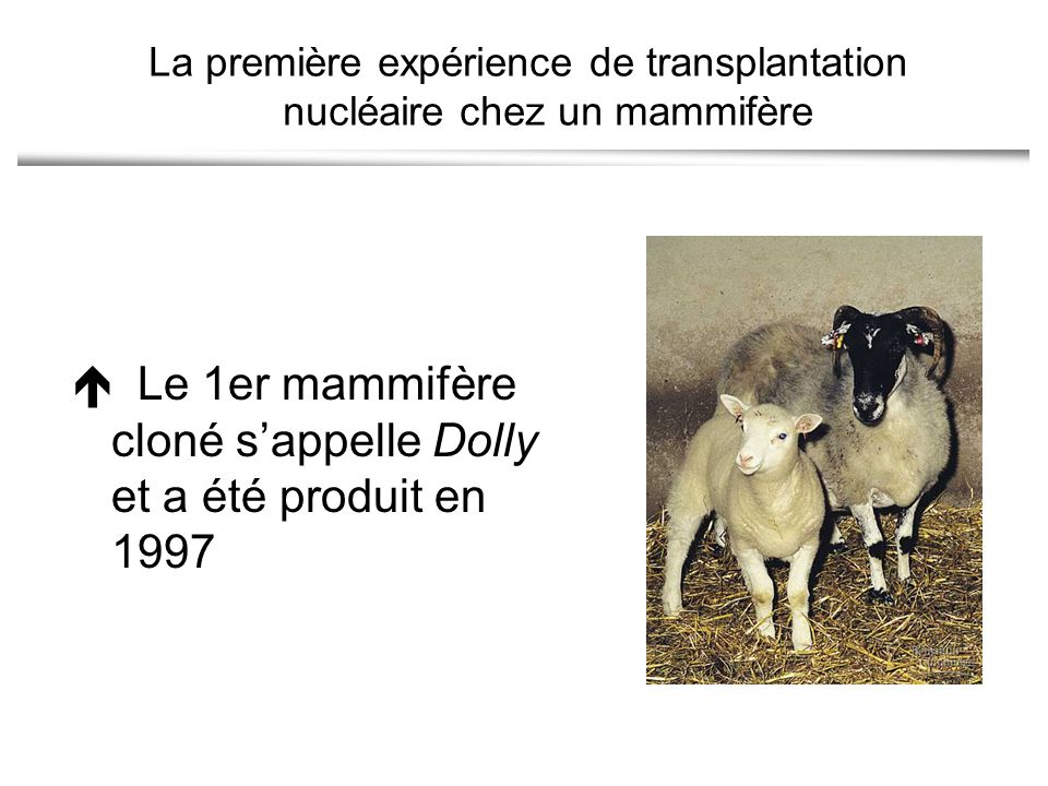 La première expérience de transplantation nucléaire chez un mammifère