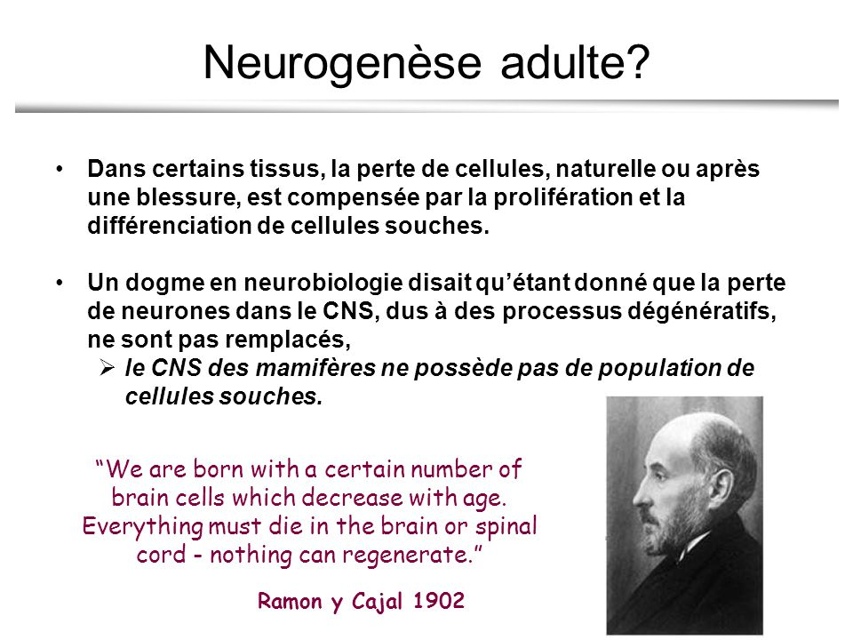 Neurogenèse adulte