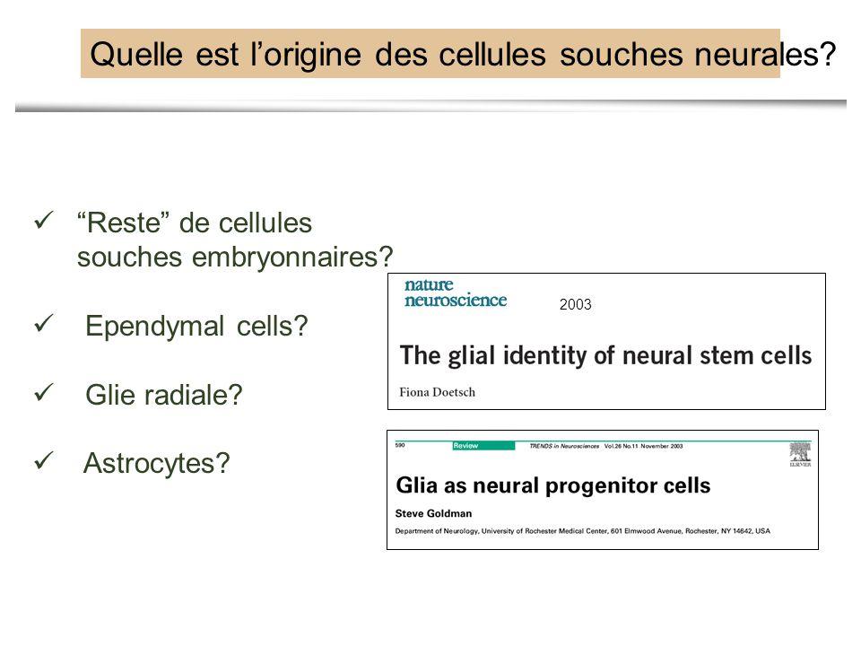 Quelle est l'origine des cellules souches neurales