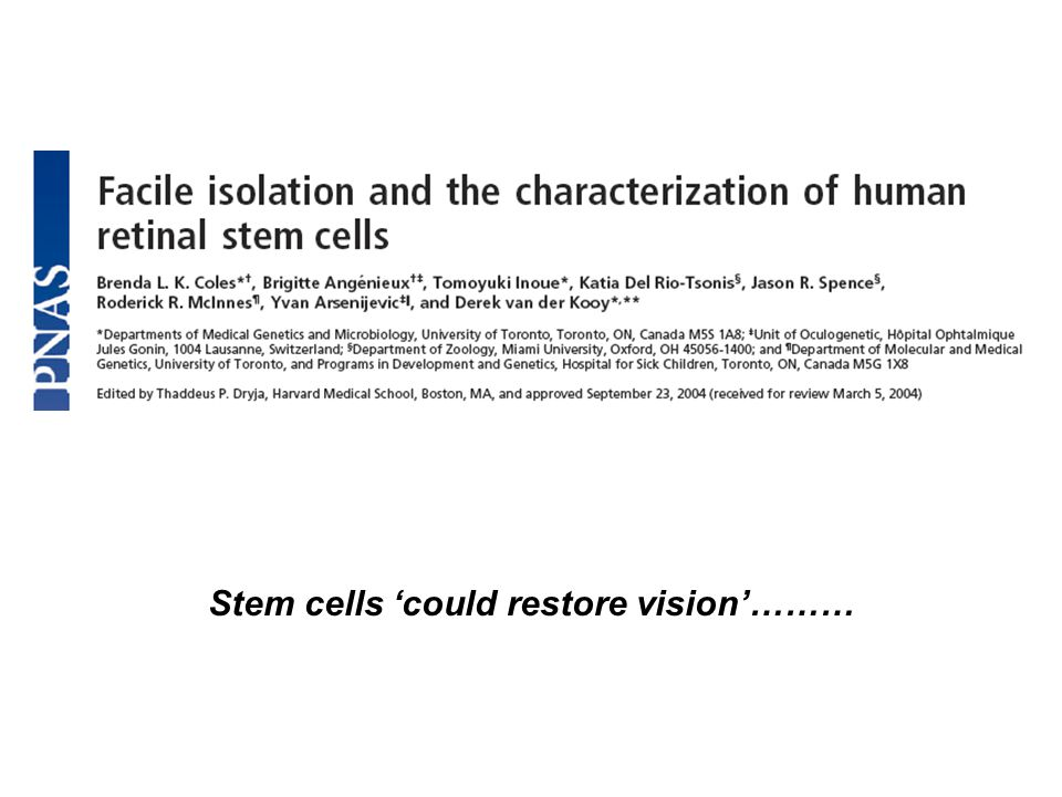 Stem cells 'could restore vision'………
