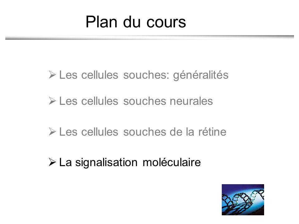 Plan du cours Les cellules souches: généralités