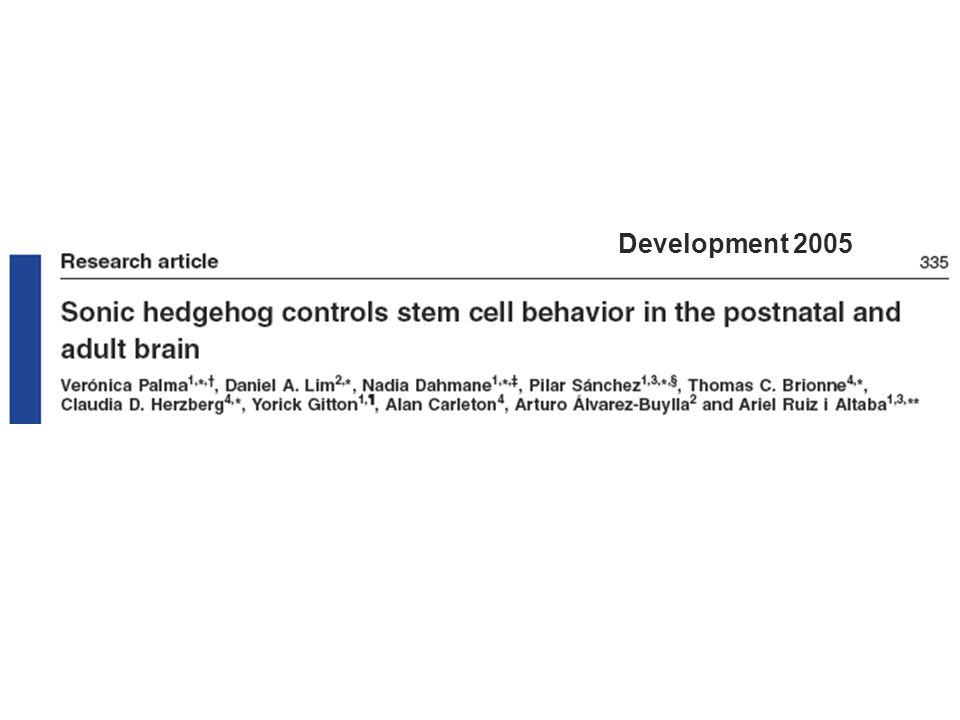 Development 2005