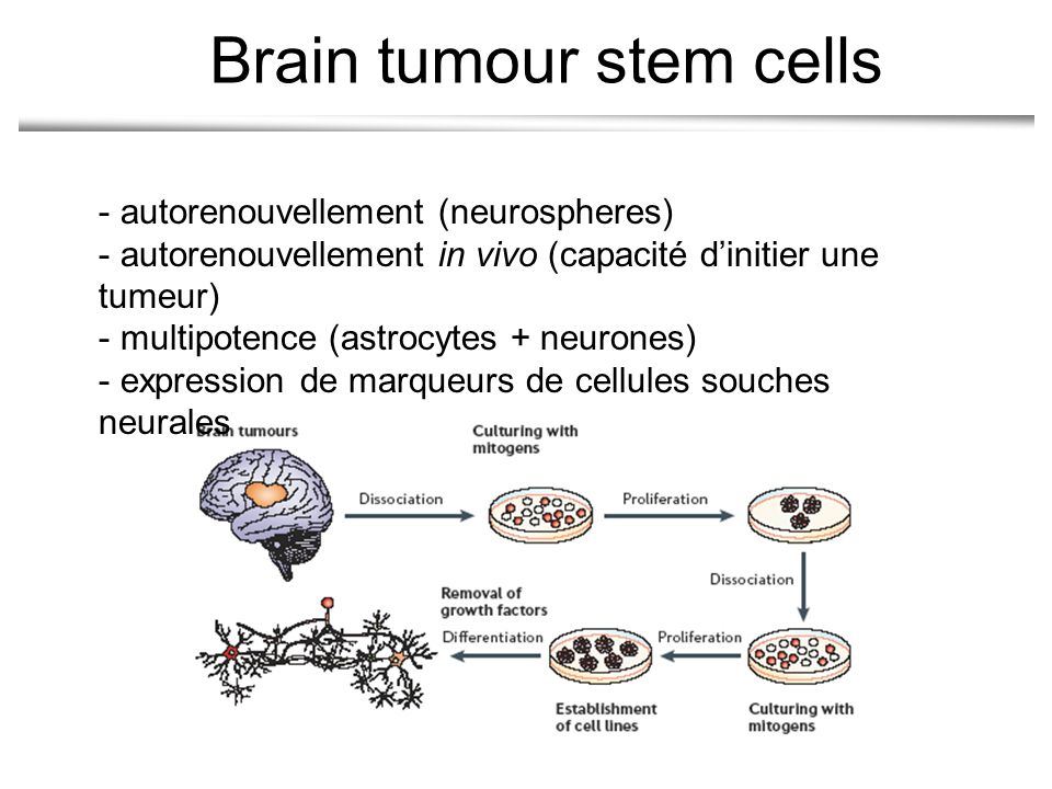 Brain tumour stem cells