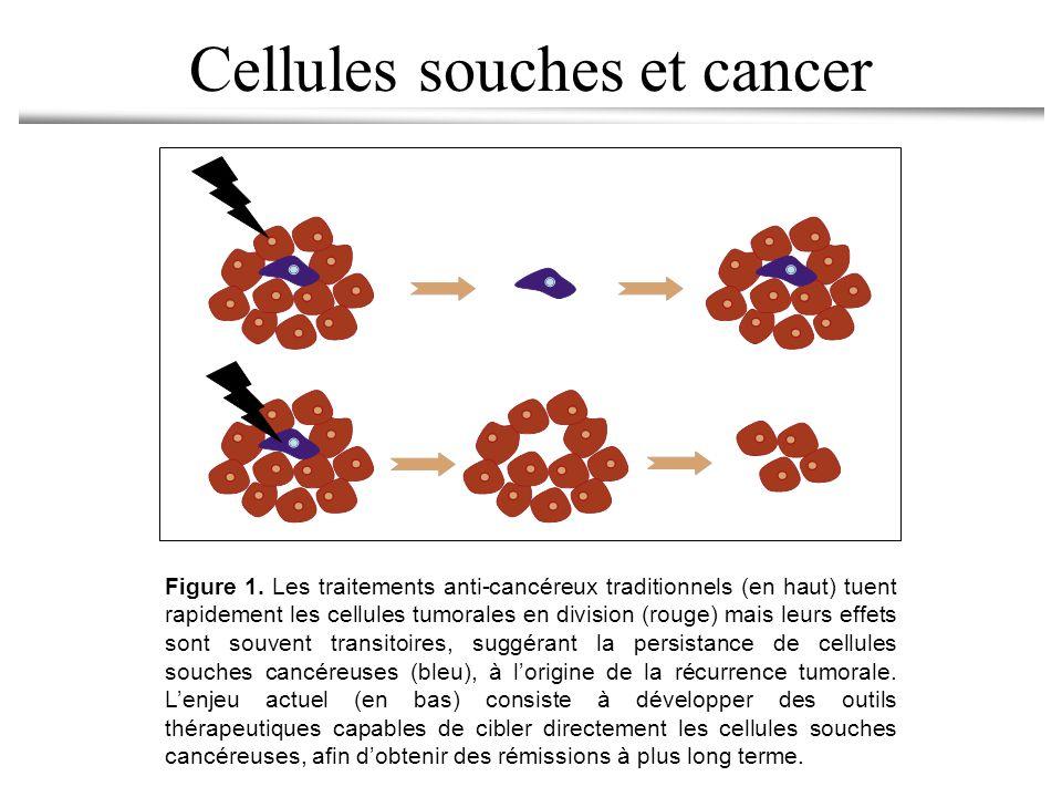 Cellules souches et cancer