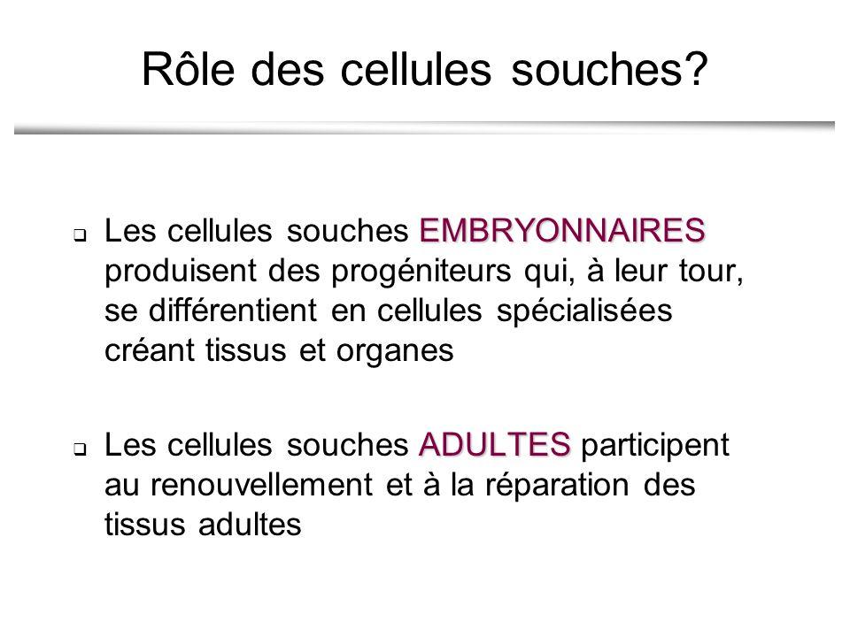 Rôle des cellules souches