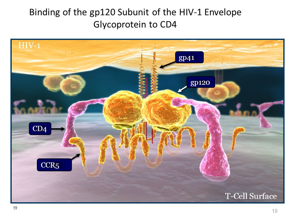 Binding of the gp120 Subunit of the HIV-1 Envelope Glycoprotein to CD4