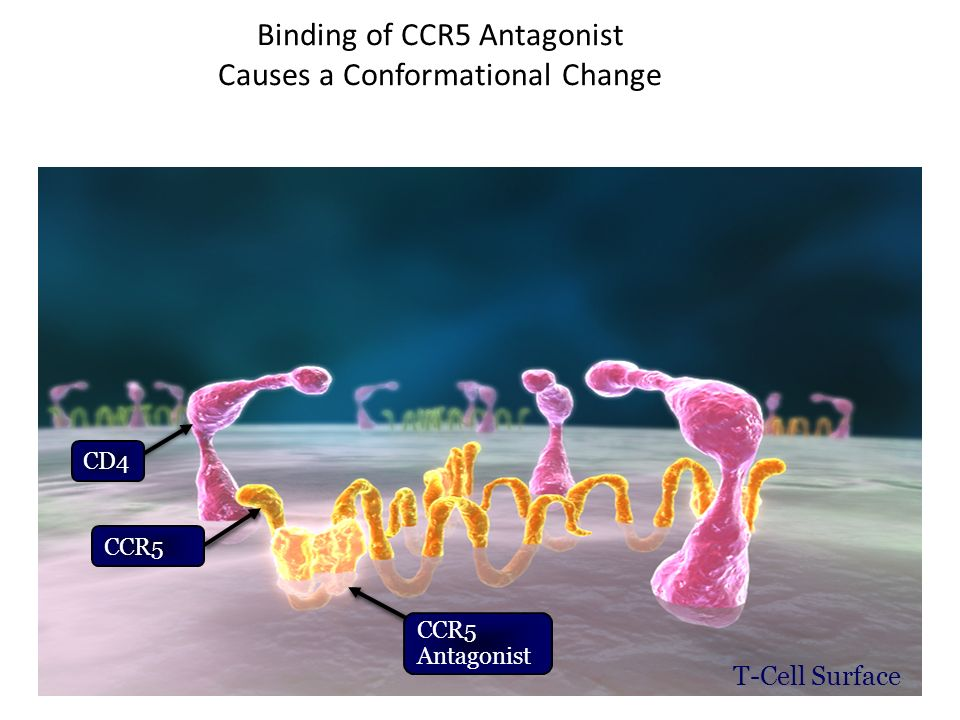 Binding of CCR5 Antagonist Causes a Conformational Change