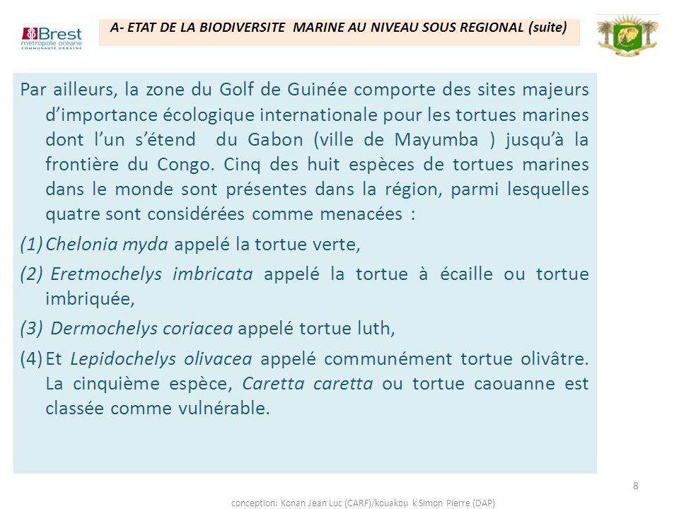 Chelonia myda appelé la tortue verte,