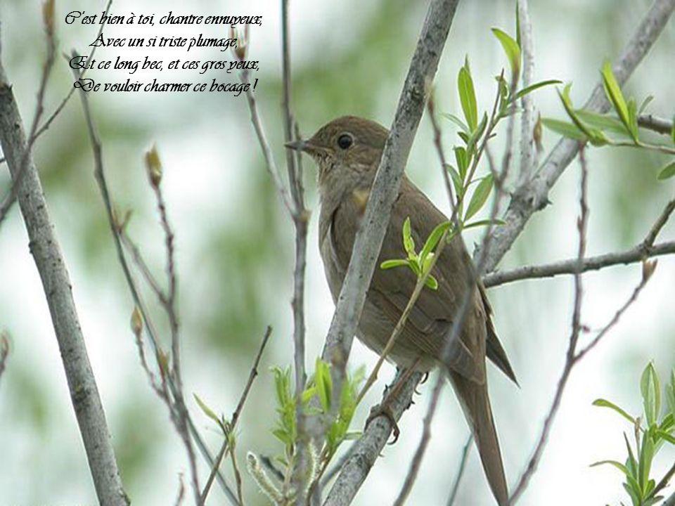 C est bien à toi, chantre ennuyeux, Avec un si triste plumage,
