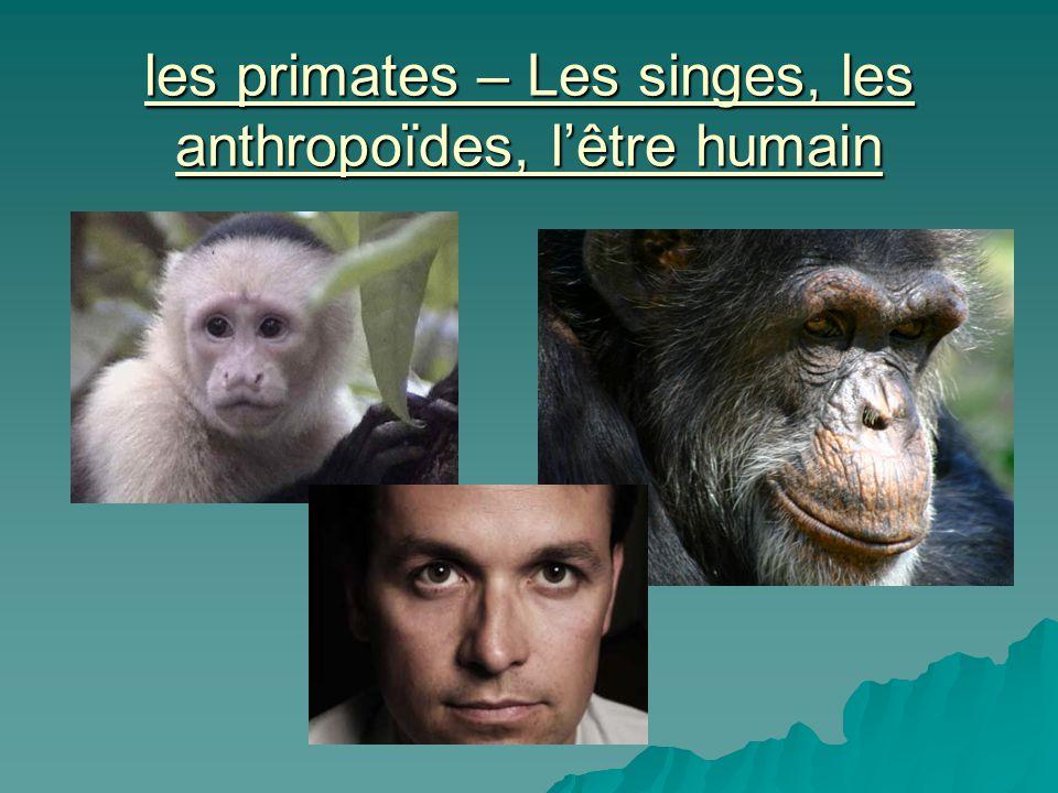 les primates – Les singes, les anthropoïdes, l'être humain