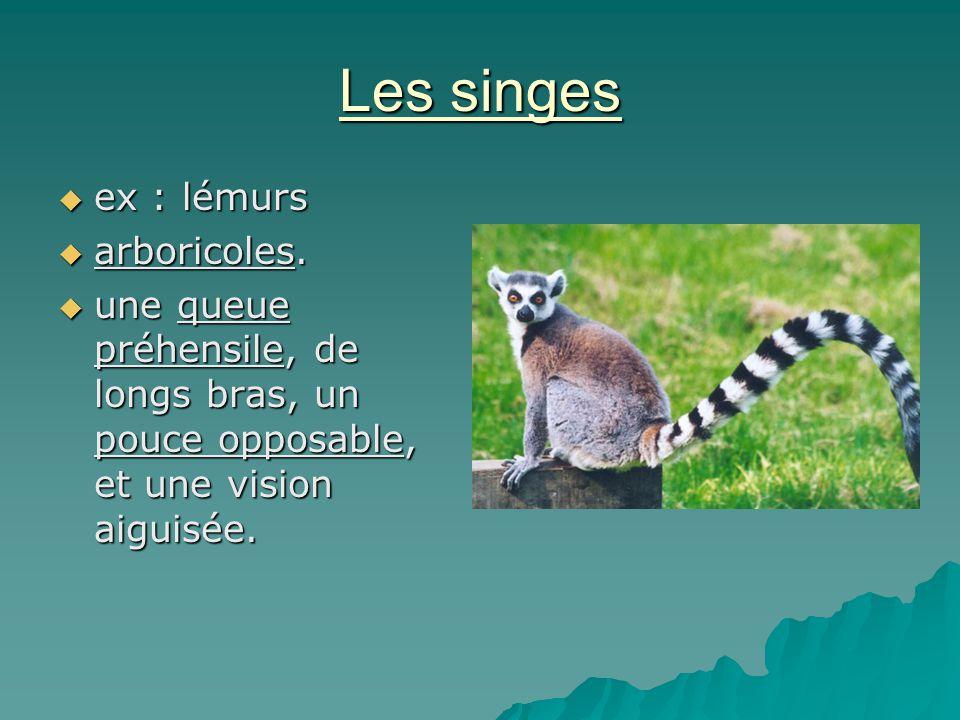 Les singes ex : lémurs arboricoles.