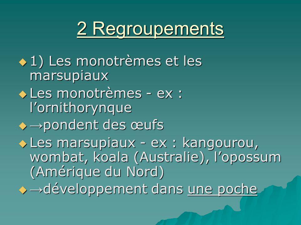 2 Regroupements 1) Les monotrèmes et les marsupiaux