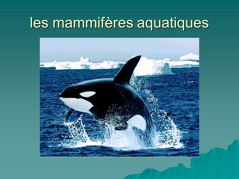 les mammifères aquatiques
