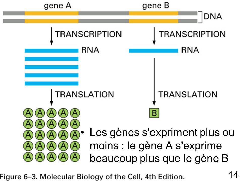 Vendredi 14 décembre 2007 Fig 6-3 p 302. Amplification du gène A. Faible efficacité du gène B.