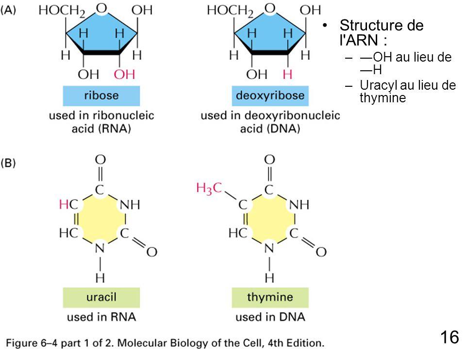 Fig 6-4p303(1) Structure de l ARN : ―OH au lieu de ―H